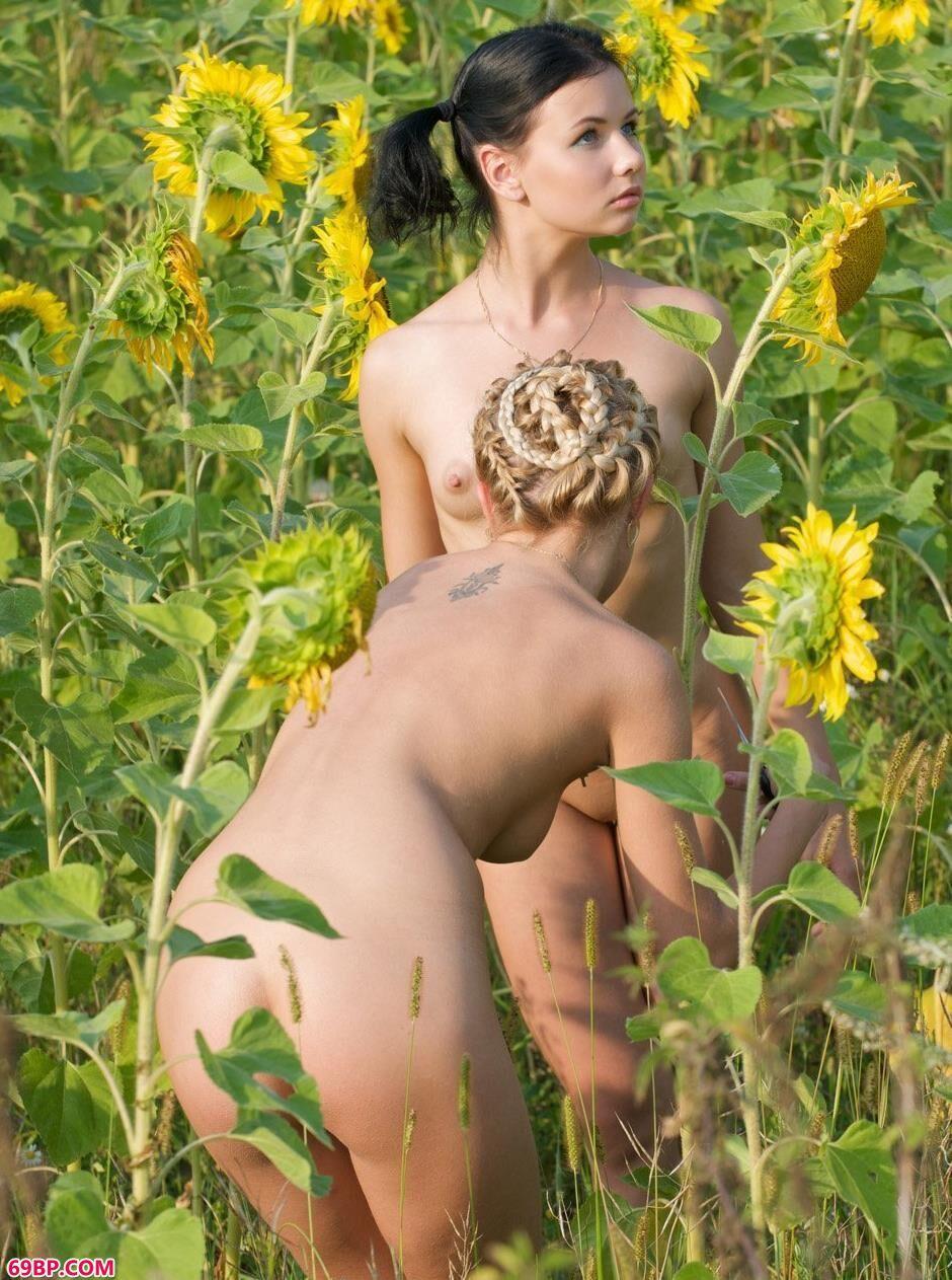 名模艾拉和滨海在向日葵花海李的性感人体1